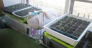 居間の温床・育苗設備・保温法