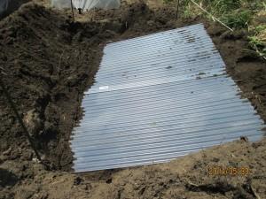長芋の苗床,塩ビ波板を敷きました。