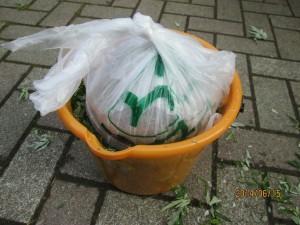 ヨモギ天恵緑汁・5kgの重しをのっけて