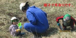 開墾中:親子で草取りです。
