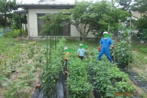 休耕地開墾後:30年来の休耕地が菜園としてよみがえりました。