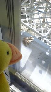 窓に作られた蜂の巣